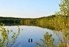 Méditation magique de marais de forêt et photo de détente Images stock