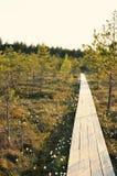 Méditation magique de marais de forêt de fleur et photo de détente Photo stock