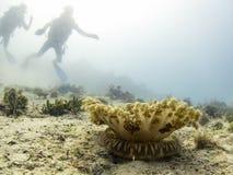 Méduses à l'envers avec la silhouette des plongeurs autonomes à l'arrière-plan photos libres de droits