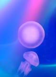 méduses Photos libres de droits