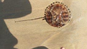 méduses Photos stock