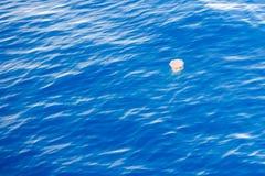 Méduses dangereuses flottant sur la surface de la mer Images stock