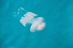 Méduses en mer ionienne en Grèce occidentale Photographie stock libre de droits