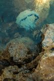 Méduses sous l'eau Photographie stock