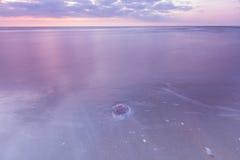 Méduses sur la plage Images libres de droits