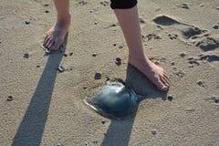 Méduses sur la plage sablonneuse avec des pieds Photographie stock