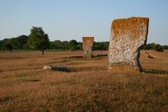 Mégalithes et moutons, île d'Oeland, Suède Images libres de droits