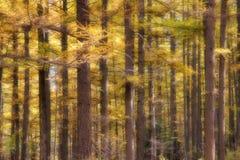 Mélèze dahurian idyllique Image stock