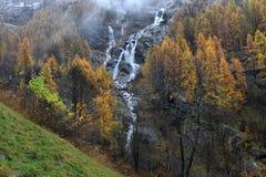 Mélèze et cascades jaunes Images libres de droits