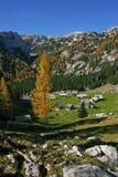 Mélèzes d'automne de Triglav NP et maisons en bois Image libre de droits