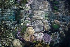 Mélanésien Coral Reef dans le bas-fond Photo libre de droits