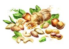 Mélange d'écrous Aliment biologique normal Illustration d'aquarelle Photo stock