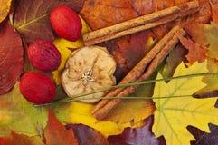 Mélange d'automne Images stock