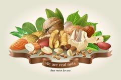 Mélange d'illustration de vecteur de différents types nuts illustration stock
