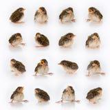 Mélange de Birdy Photo libre de droits