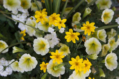 Mélange de fleur de ressort Photo stock