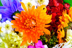 Mélange de fleurs Images libres de droits