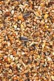 Mélange de graine d'oiseau Image stock