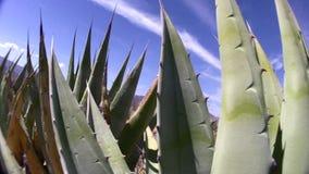 Mélange de tir d'AGAVE et de ciel de la Californie de désert de Borrego banque de vidéos