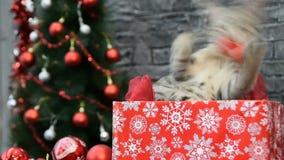 Mélange de trois scènes, belle fille avec un chat dans l'esprit de vacances entouré par la décoration du ` s de nouvelle année clips vidéos