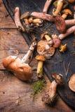 Mélange des champignons de forêt Image libre de droits