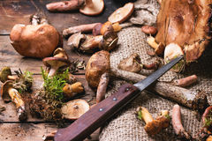 Mélange des champignons de forêt Photographie stock