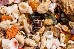 Mélange des coquilles, des cailloux et des coraux de mer d'Egypte images libres de droits