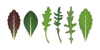 Mélange des feuilles de salade Feuille d'Arugula, d'épinards et de laitue Illustration de vecteur réglée dans le style plat Illustration Libre de Droits