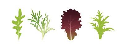Mélange des feuilles de salade Feuille d'Arugula, d'épinards et de laitue Illustration de vecteur réglée dans le style plat Illustration Stock