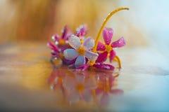 Mélange des fleurs colorées jaunes et roses Images libres de droits