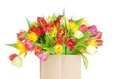 Mélange des tulipes dans le sac de papier Photos libres de droits