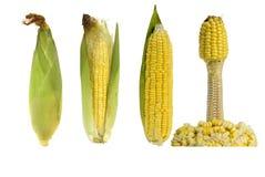 Mélange du maïs quatre sur un fond blanc Photo stock