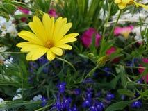 Mélange vibrant de couleurs photos stock