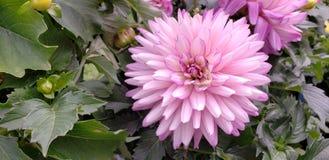 Mélange vibrant de couleurs photo libre de droits