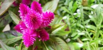 Mélange vibrant de couleurs photographie stock libre de droits