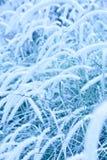 Mémoire bleue Photos stock