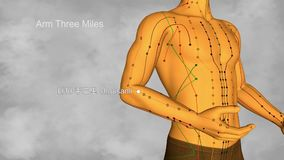 Méridien de gros intestin, vidéo, illustration 3D banque de vidéos