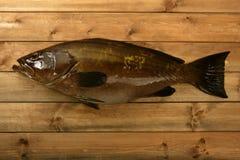 mérou de pêche de poissons de loquet au-dessus de bois de fruits de mer image libre de droits