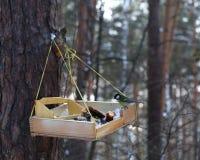 Mésange bleue alimentant en hiver Photographie stock libre de droits
