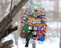 Mésange bleue alimentant en hiver Images libres de droits