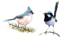 Mésange et fée Wren Birds Watercolor Illustration Set tiré par la main Photo stock