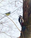 Mésange et ouzel d'oiseaux sur l'arbre dans la forêt d'hiver Image stock