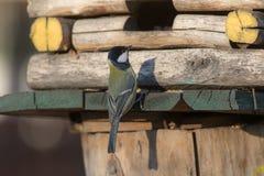 Mésange sur une maison en bois Photographie stock