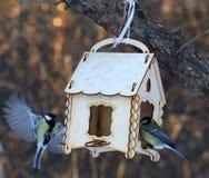 Mésanges alimentant en hiver Images libres de droits