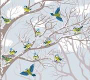 Mésanges bleues Images libres de droits