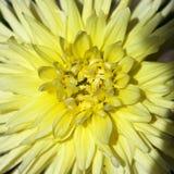 Méson pi jaune Photo stock