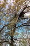 Métal dans l'arbre Photos libres de droits