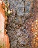 Métal de rouille Image libre de droits