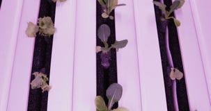 Método da hidroponia de crescer plantas na água UV cresça luzes para plantas crescentes filme