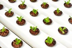 Método del hidrocultivo de crecer las plantas Imagen de archivo